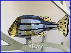 SWAROVSKI PARADISE FISH CAMARET CHIRA CHIPILI CLEONA CATUMBELA and LARGE STAND