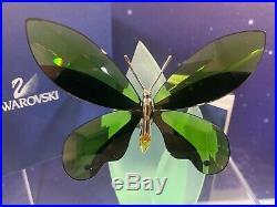 Swarovski Crystal Mint Figurine Paradise Butterfly Anamosa Moss Green 622739 MIB