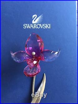Swarovski Crystal figurine Dorora Fuchsia Rain Paradise flower 681542